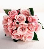 Valentines Rose-Truly Pink - Bouquet of 12 Roses