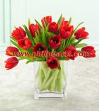 Valentines Tulip - 15 Holiday Red