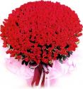 100 pcs Red Roses